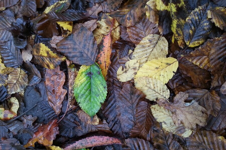 Autumn leaves on muddy trails in the Chilterns