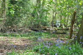Bluebells surround the new Bushcraft area in Buckinghamshire