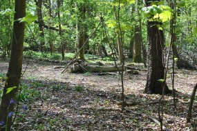New woodland camp for Bushcraft in Buckinghamshire