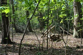 A view into the new Bushcraft location in Buckinghamshire