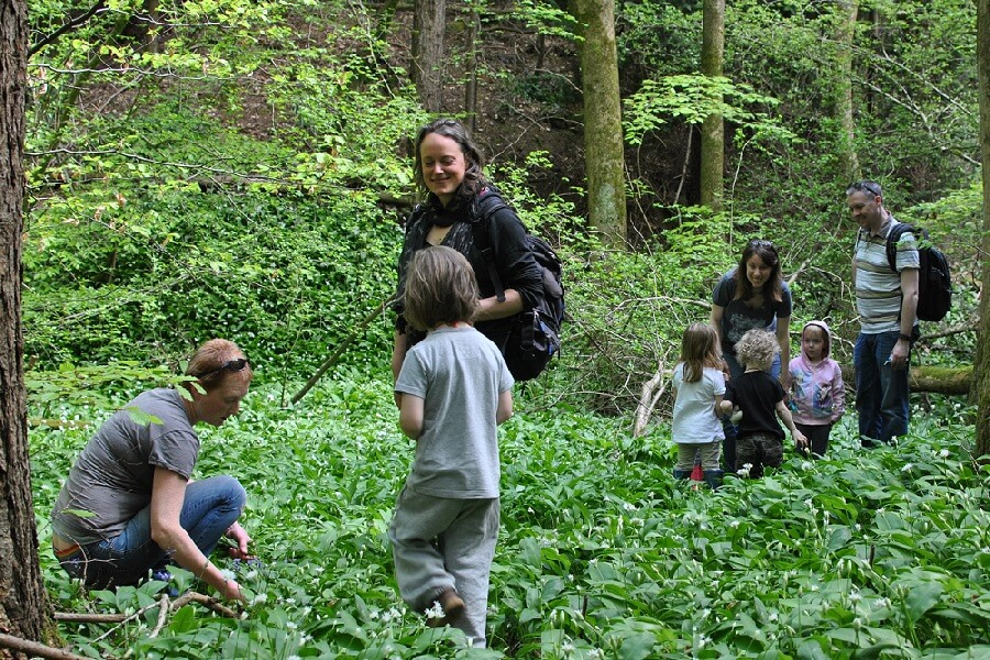 Families gathering wild garlic in May