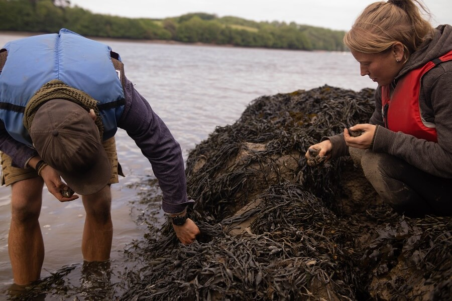 Foraging for mussels on the River Dart with The Old Way