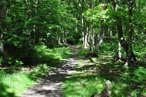 Hodgemoor Woods in June - guided woodland walk