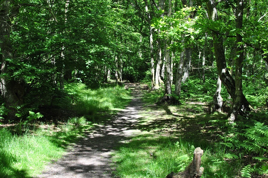 Hodgemoor Woods in June - guided woodland walk
