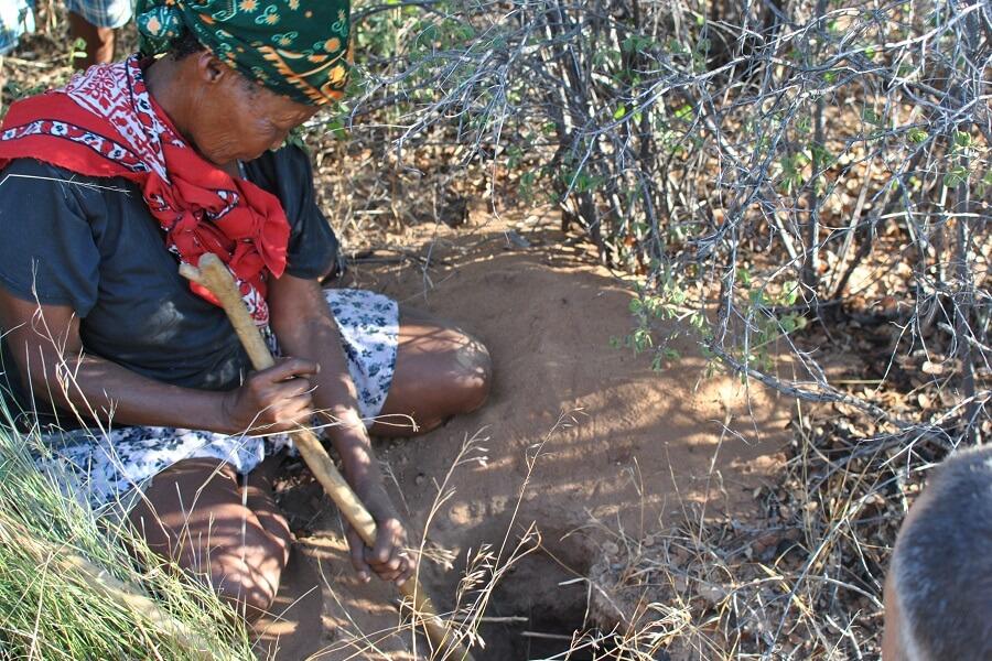 Namibia - Digging water root