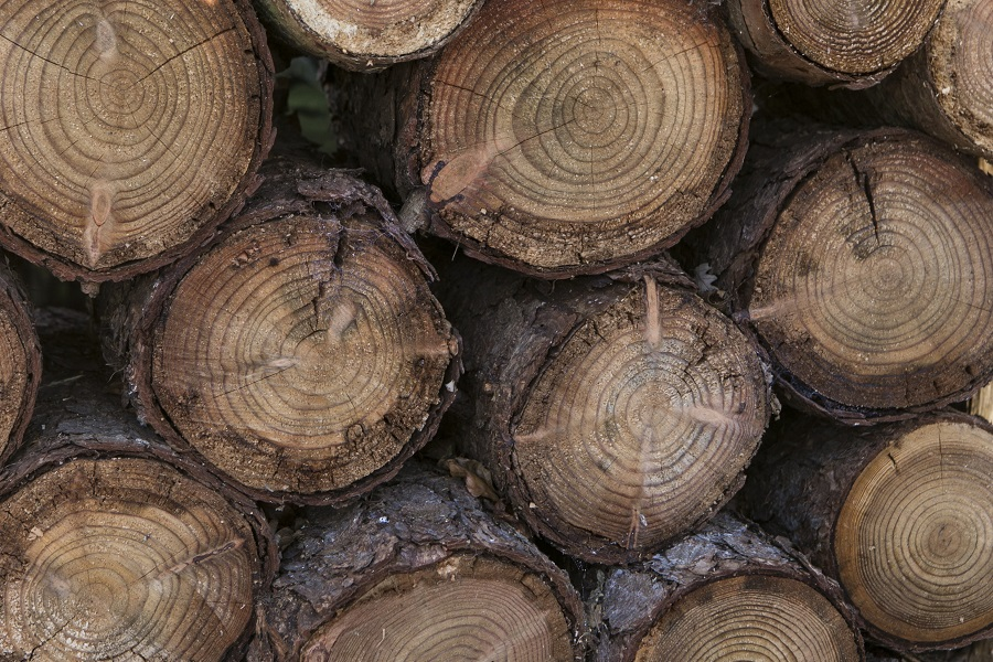 Wood stack of larch logs
