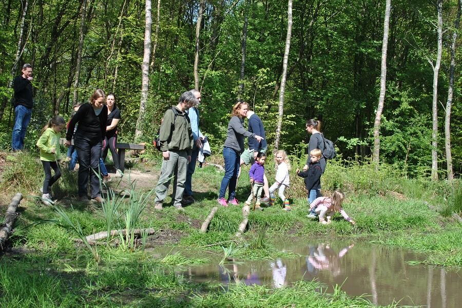 Amazement at the amount of pond life - loving the tadpoles and water boatmen