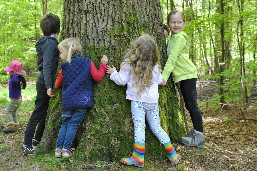 Tree hugging - using our senses to recognise a mighty oak